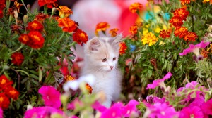 Kitten in Spring Time